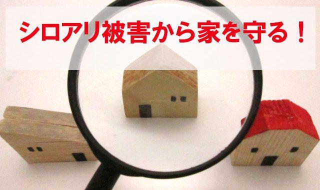シロアリ被害から家を守る方法をご紹介します|沖縄でリフォームのことならあうん工房